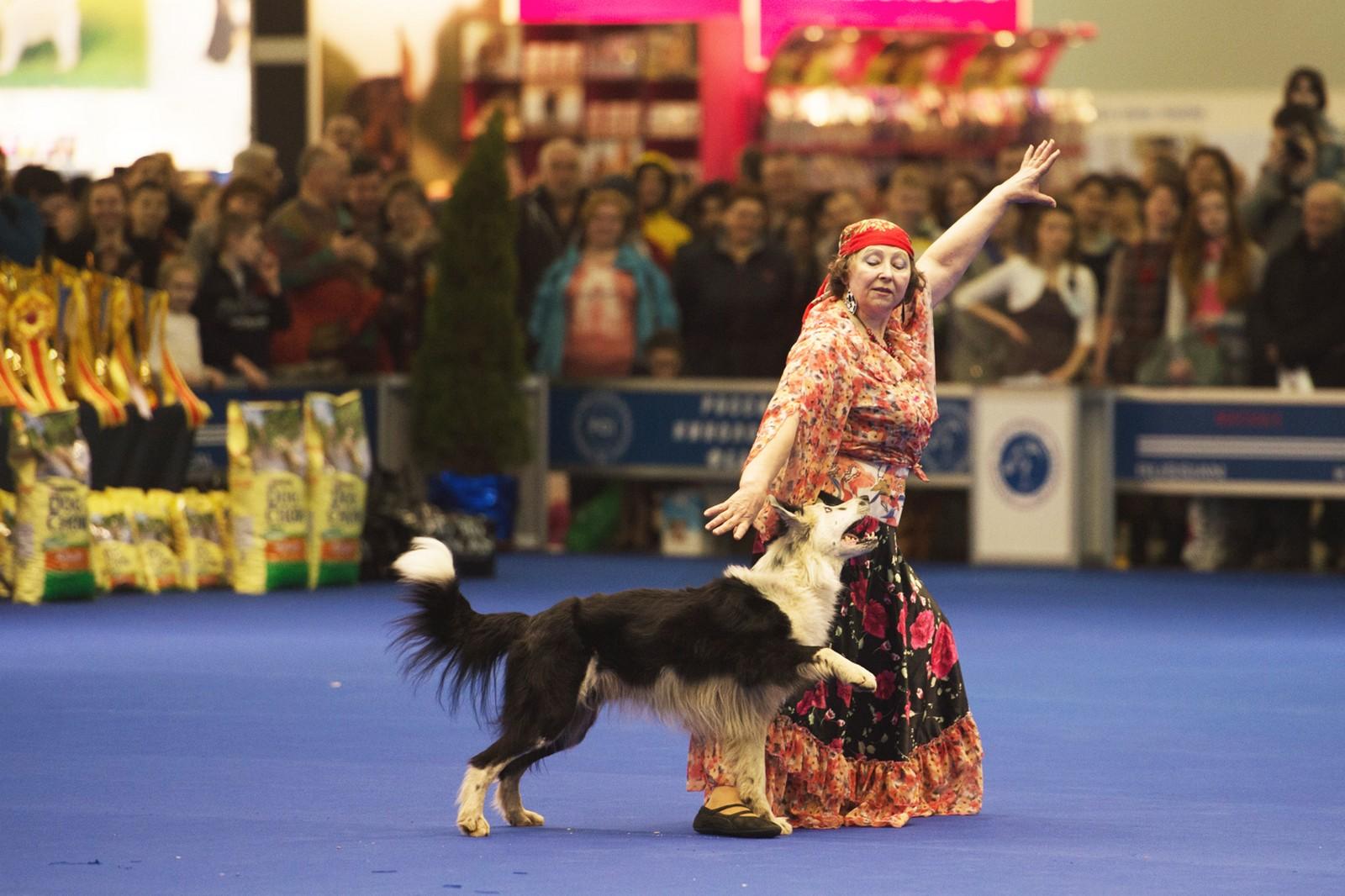 World Dog Show (World Dog Championship) in 2018 8