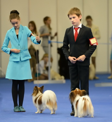 Junior handler competitions